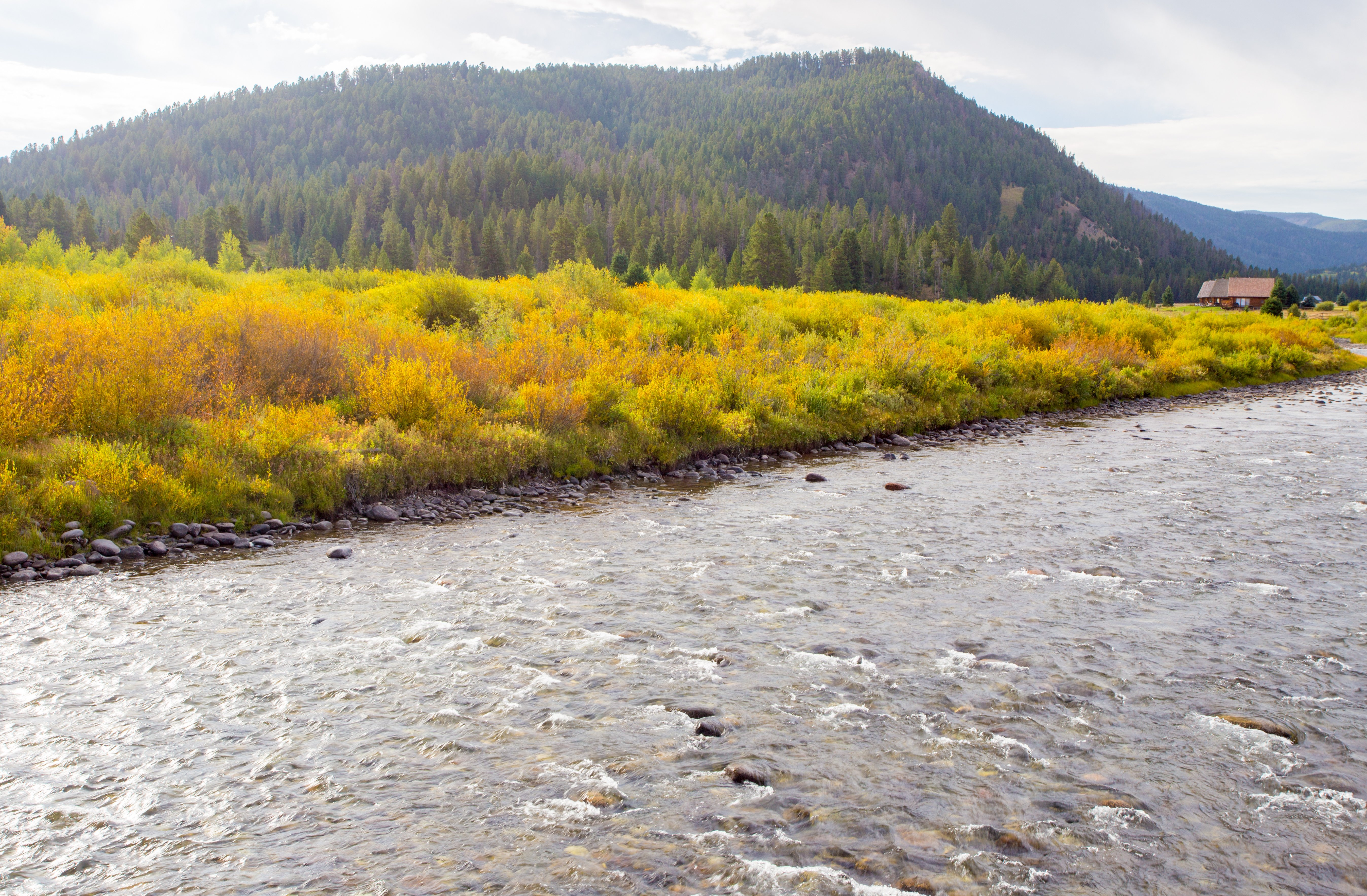 fall colors on the Gallatin River in Bozeman