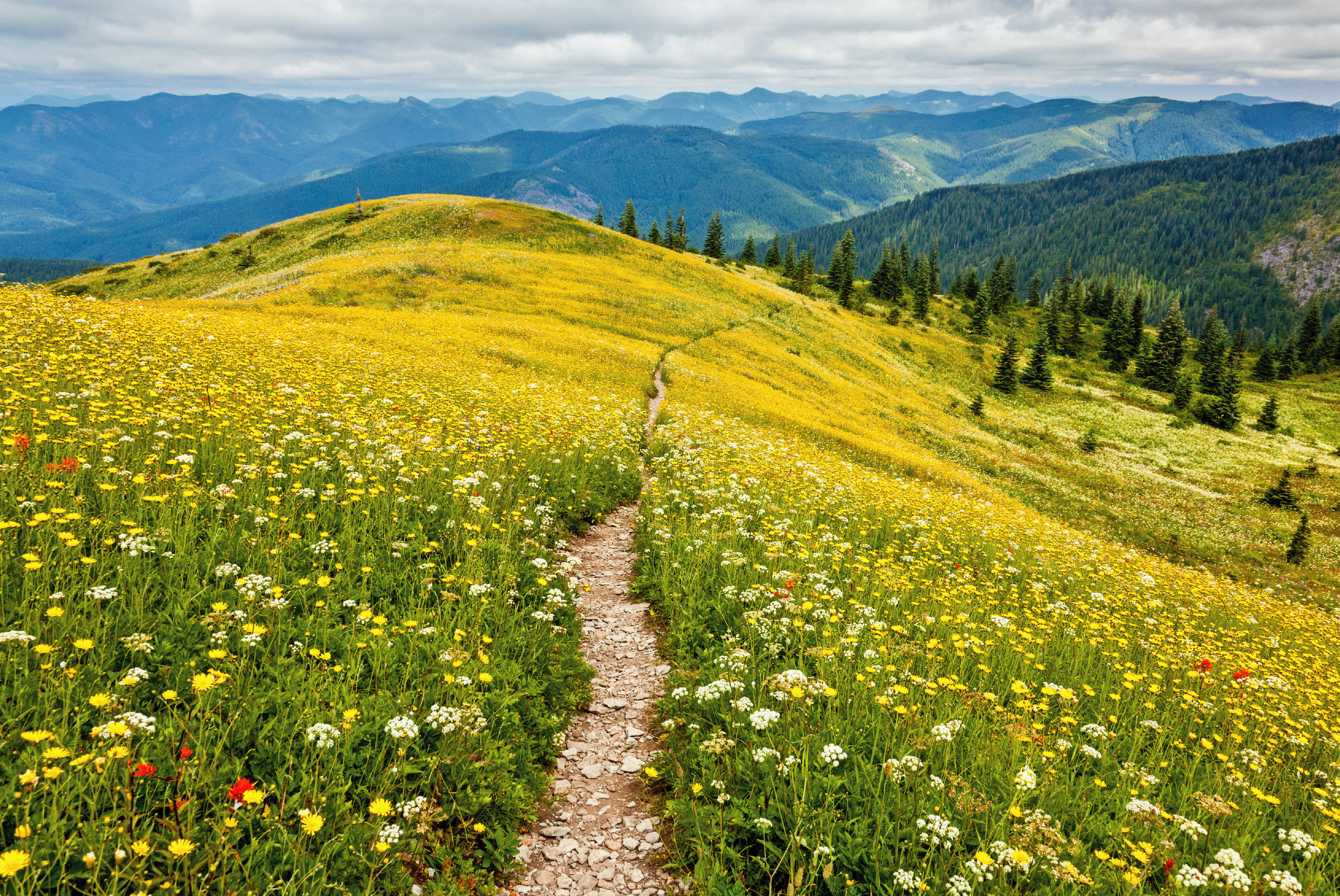 hiking trail surrounded by wildflowers