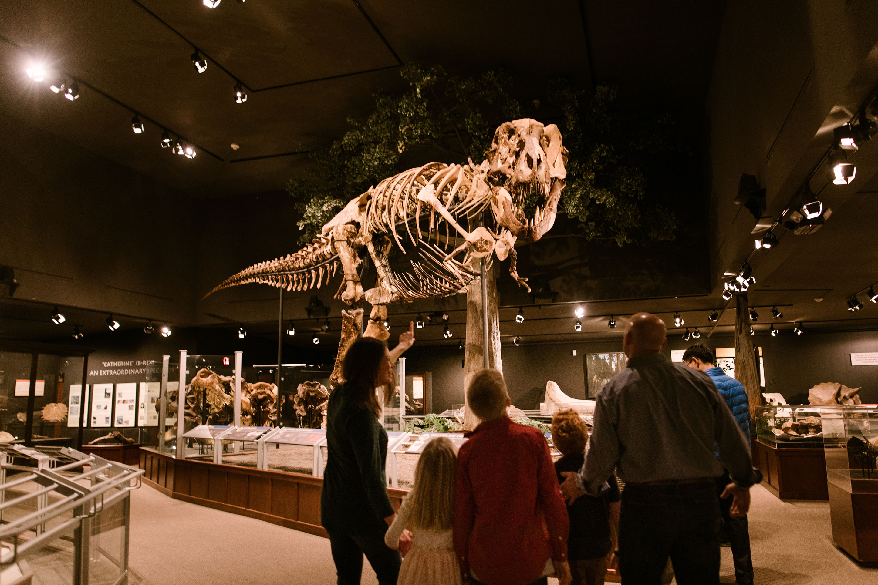 family looking at the skeleton of a dinosaur at Museum of the Rockies