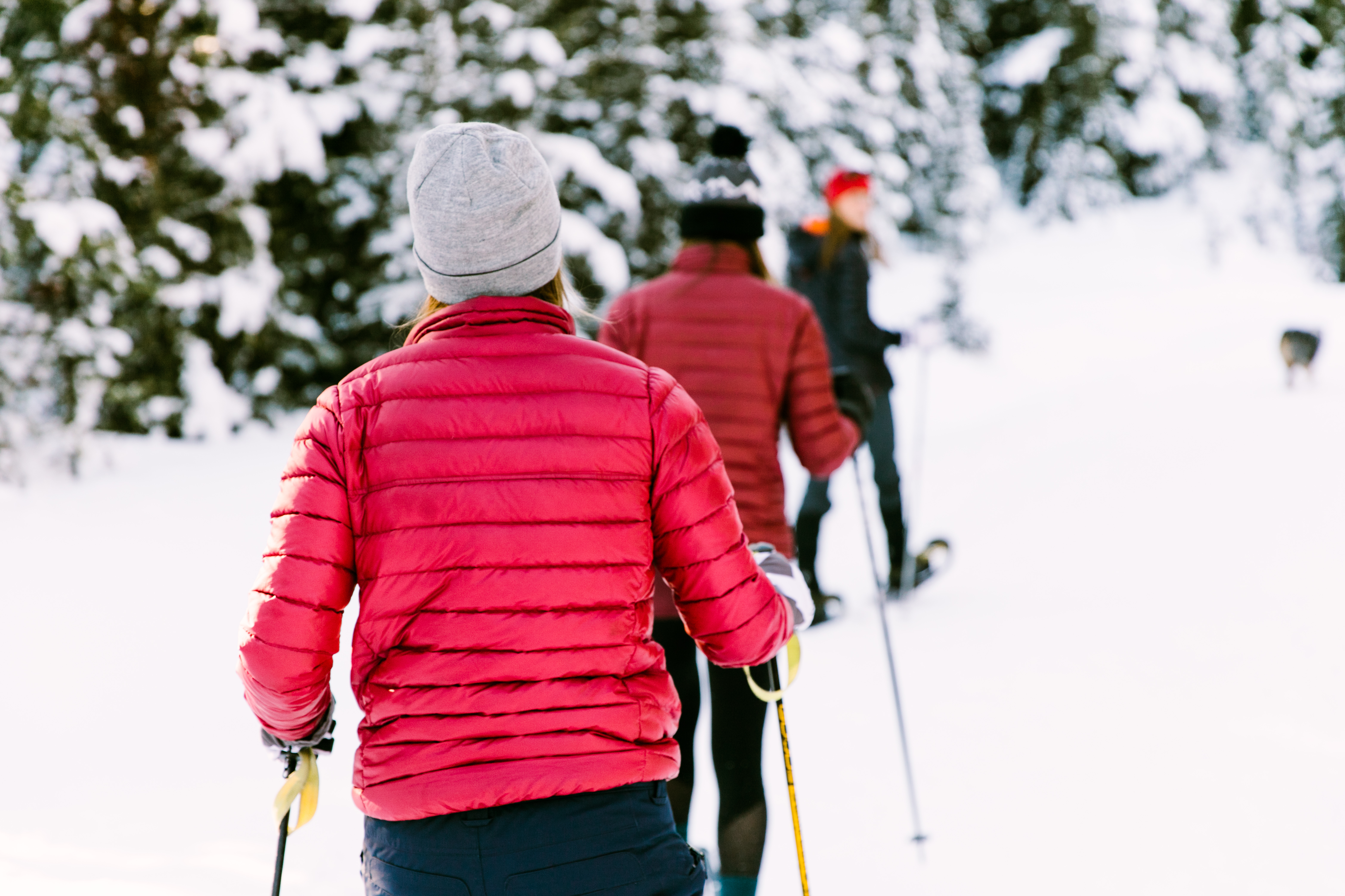 Snowshoeing in Yellowstone National Park