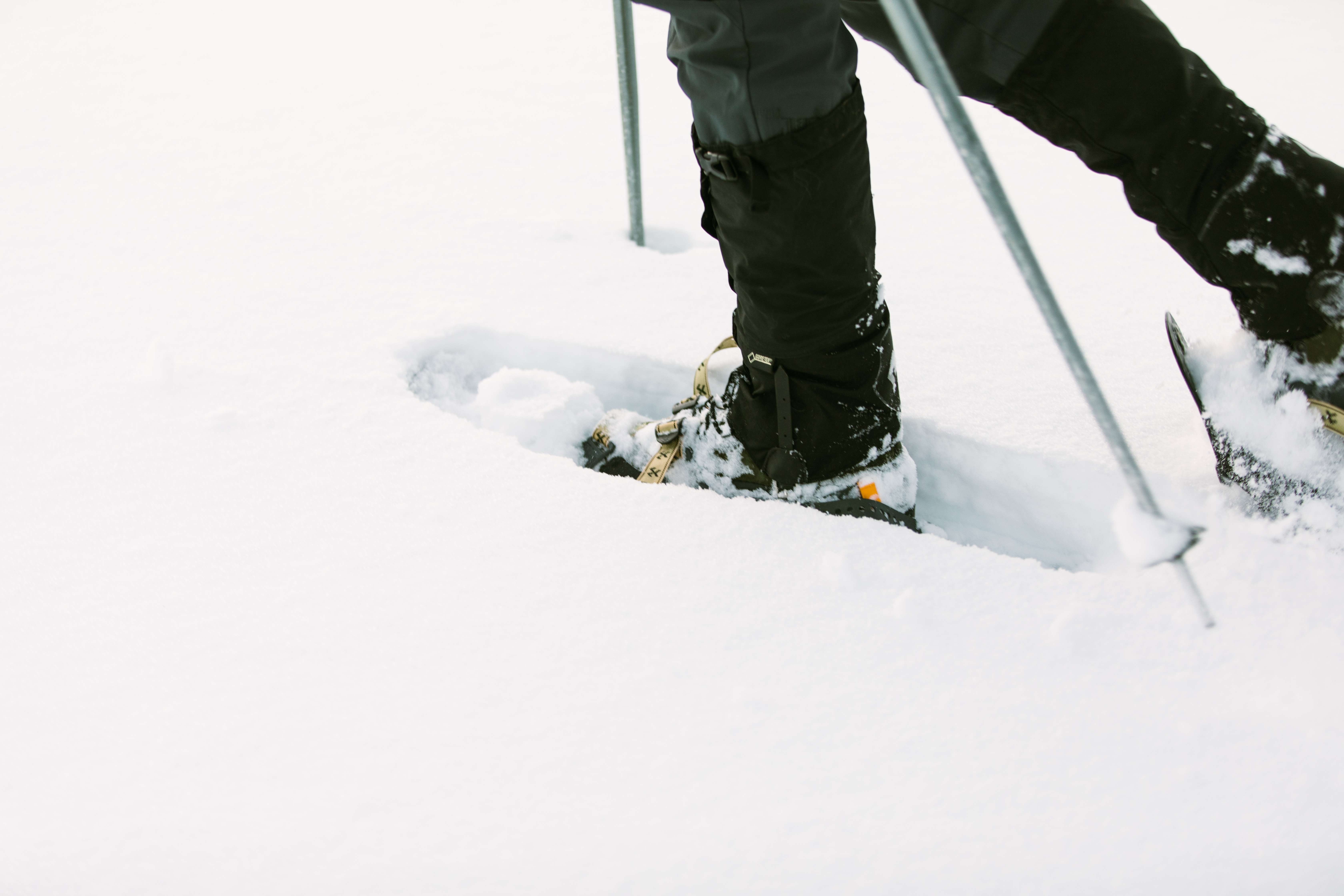 Yellowstone Snowshoeing Trips