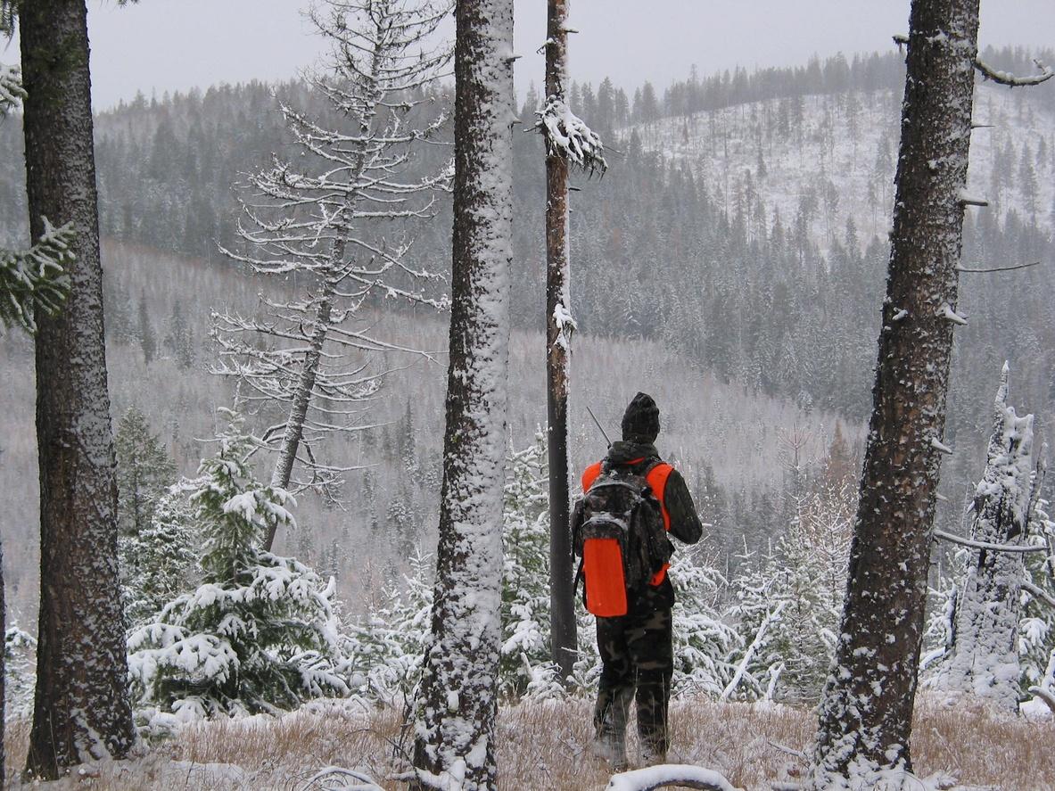 Elk Hunting in Montana