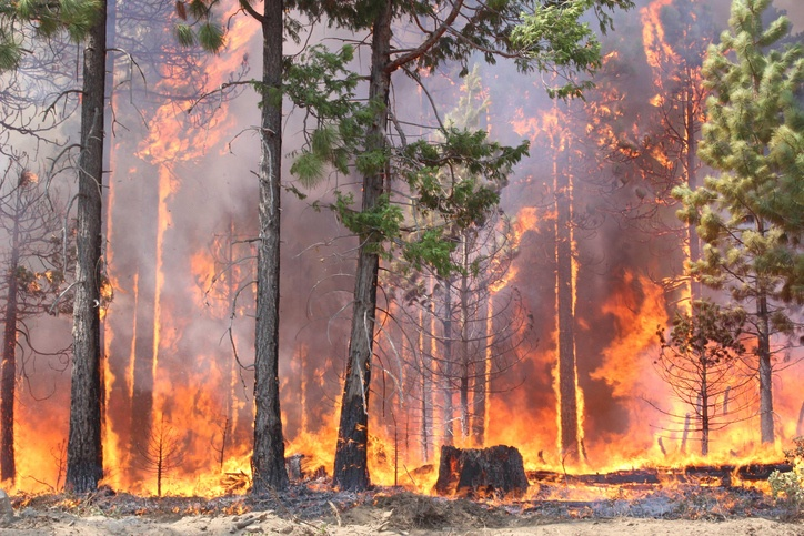 Montana Forest Fires