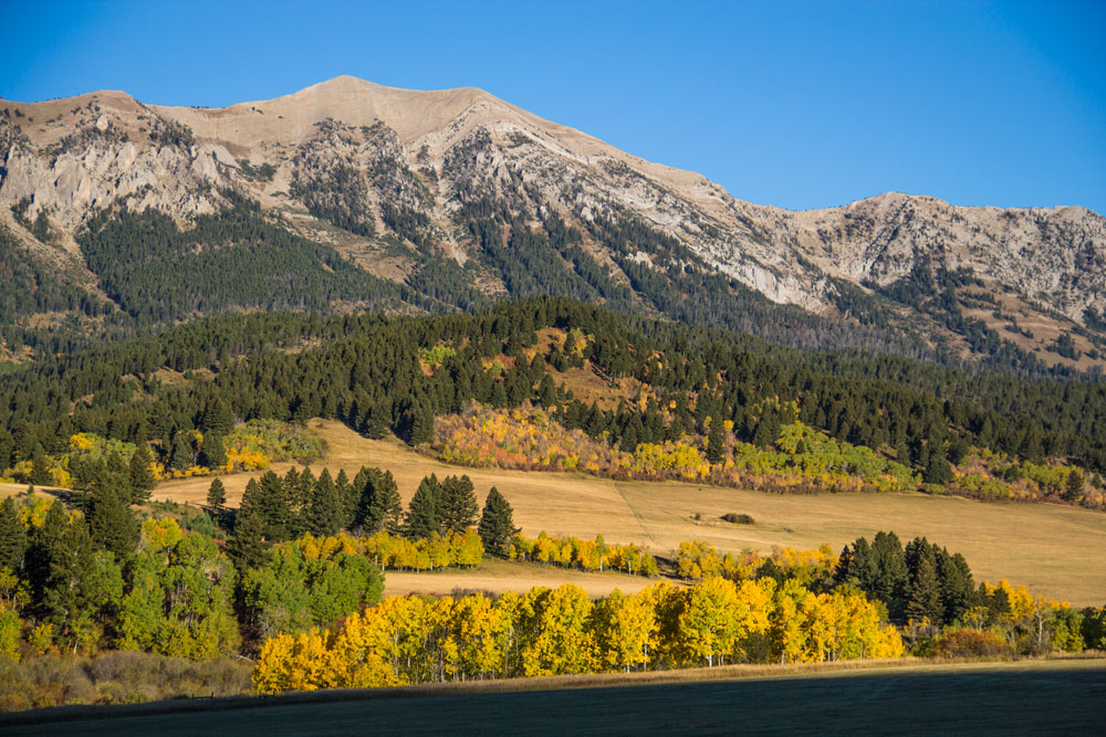 fall colors in Bozeman Montana