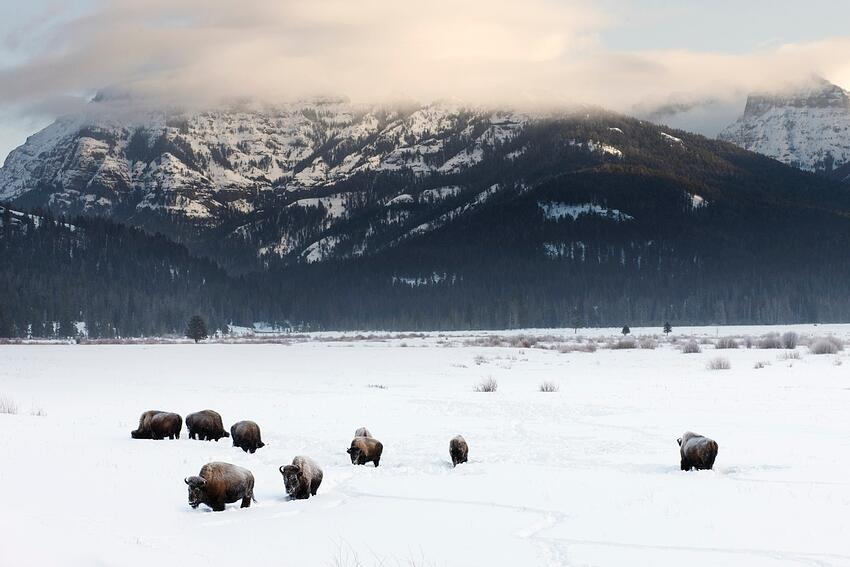 Yellowstone-in-the-winter
