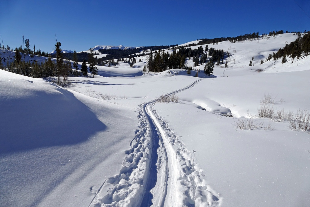 Cross-Country Skiing and Showshoeing in Yellowstone