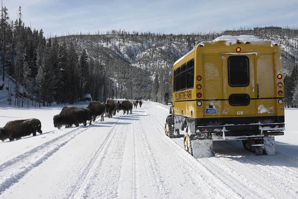 Snowcoach Tours in Yellowstone