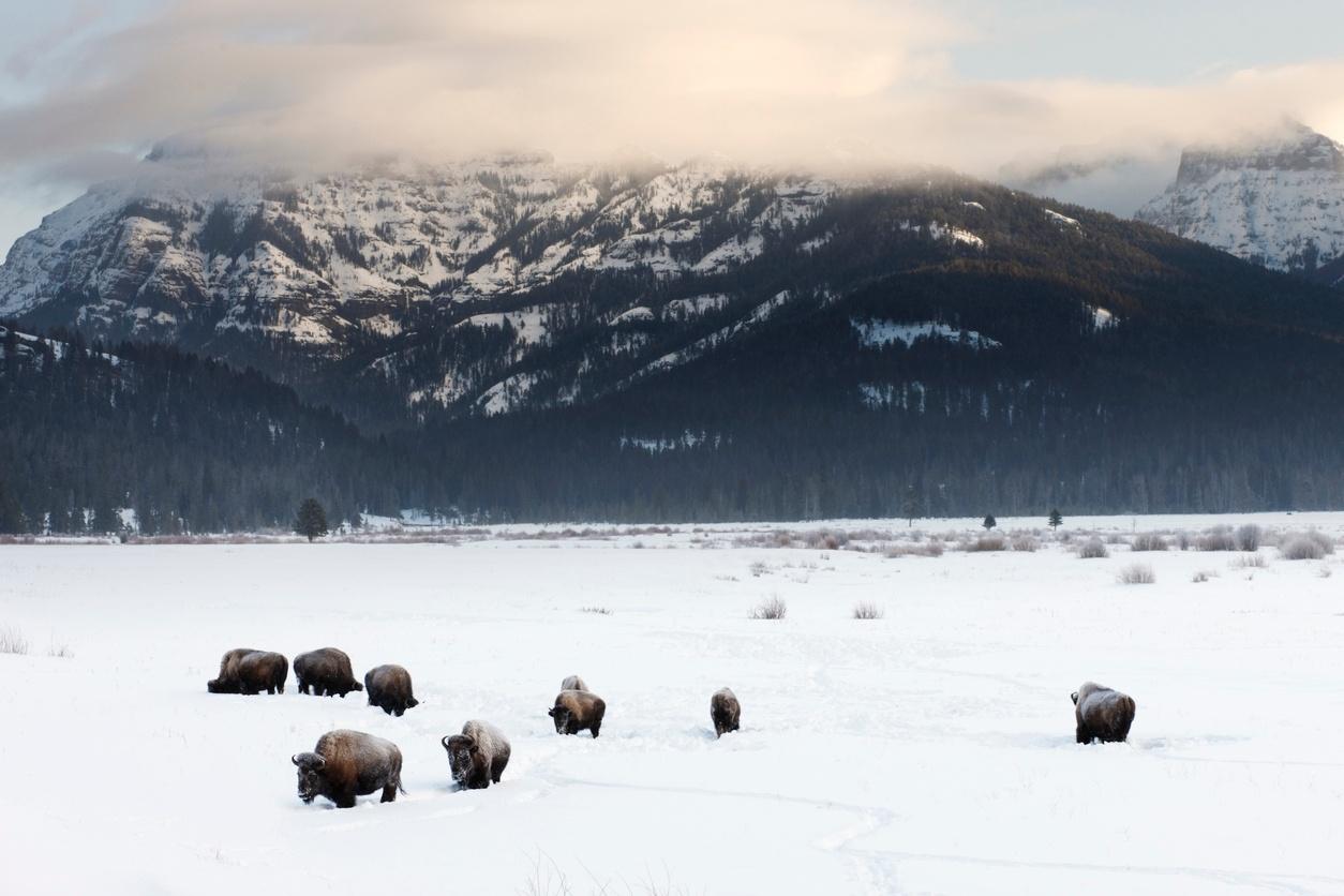 Yellowstone-in-the-winter.jpg
