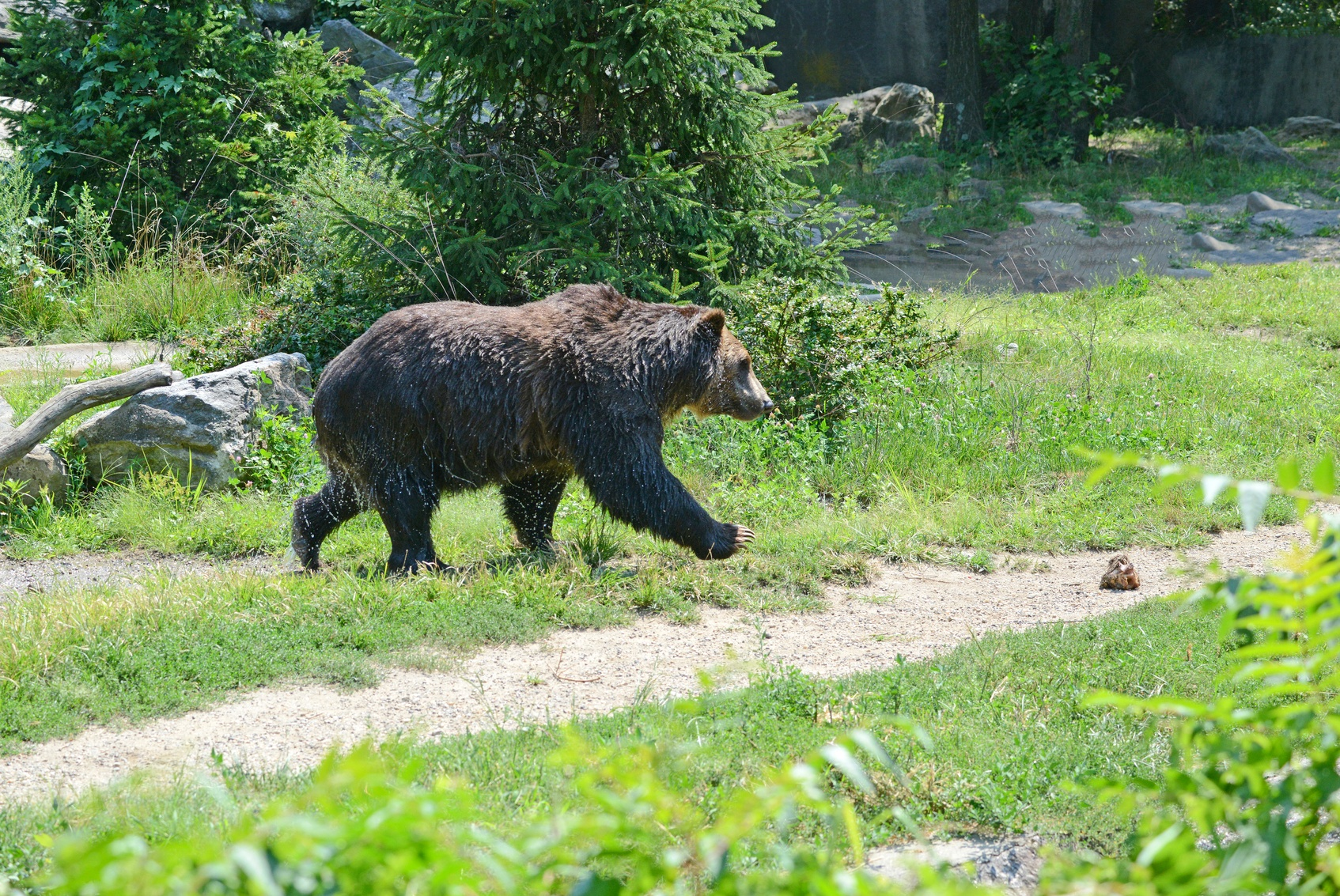 Be bear aware while hiking in Yellowstone