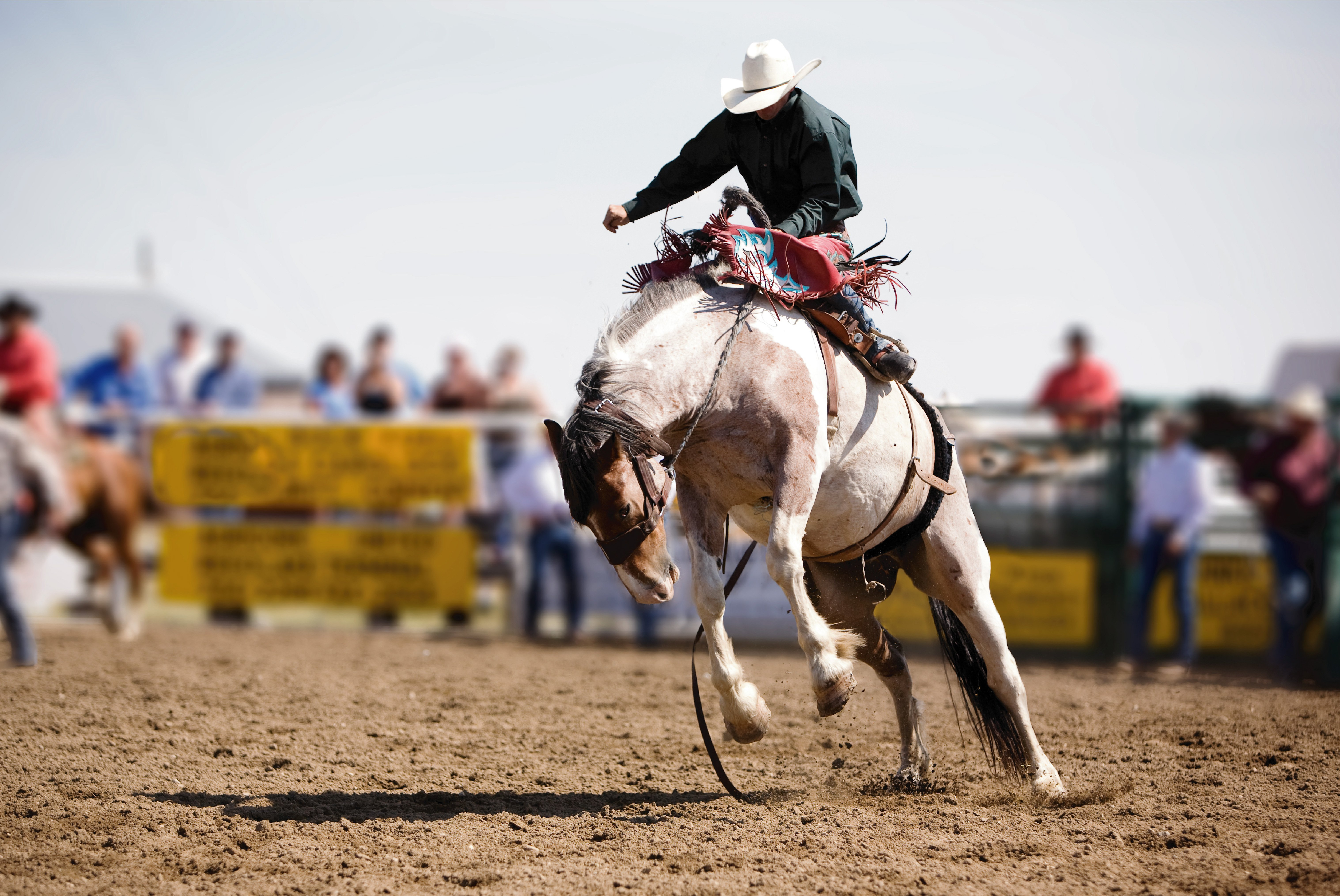 summer rodeo in montana